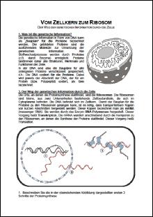 Vom Zellkern zum Ribosom.pdf