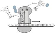 Molekulargenetik